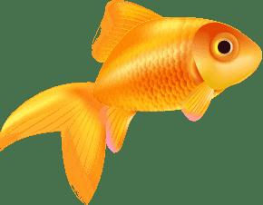 Aplus Werbeagentur Goldfisch
